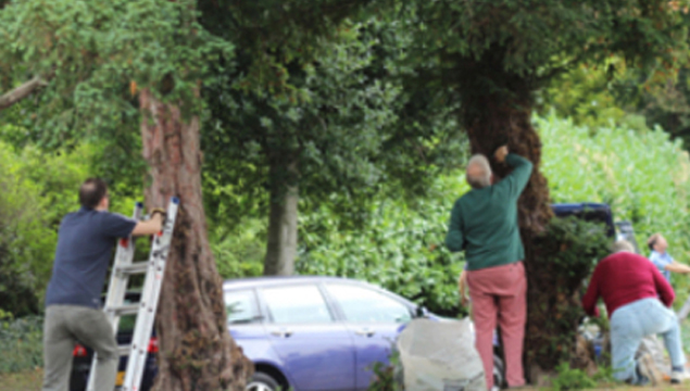 photo of gardeners clearing the front of church and climbing trees